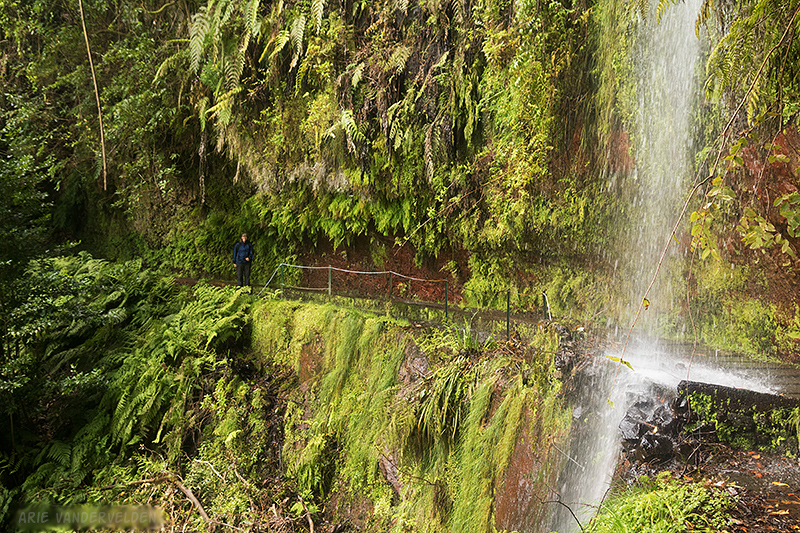 Waterfall, Levada do Rei.