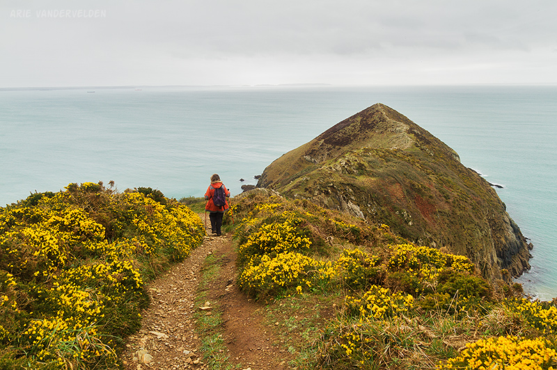 Pembrokeshire coastal path.