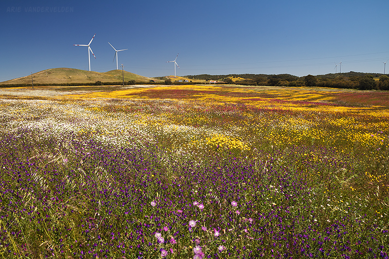 A stunning display of wildflowers.