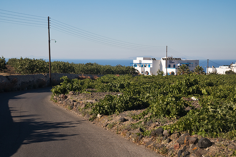 Hotel Olympia, viewed from the main road. It is surrounded by vineyards. Note that in Santorini they let the vines creep along the ground, rather than stringing them up.