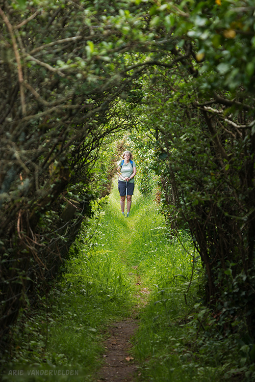 Tunnel through the bush.