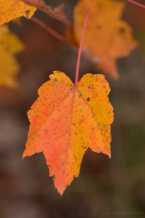 The leaves were yellow, orange, and orangey-brown, and every shade in between.