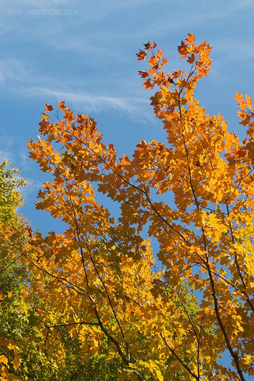 Yellowey-orange.