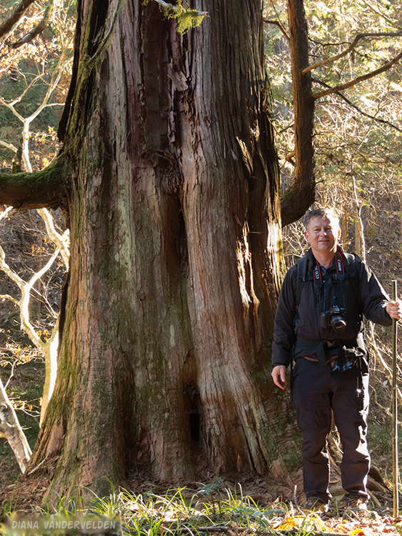 Arie at an old-growth tree.