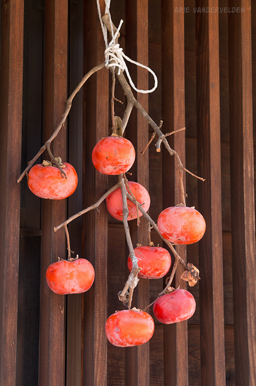 Persimmons, drying.