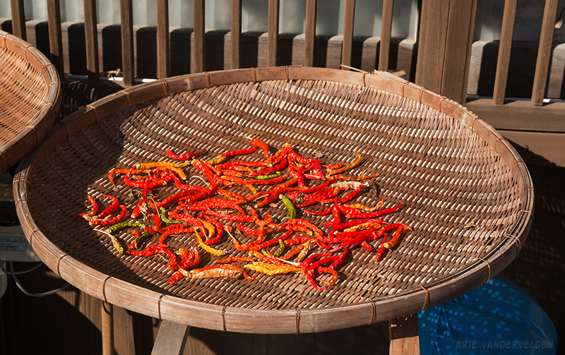 Chilies drying.