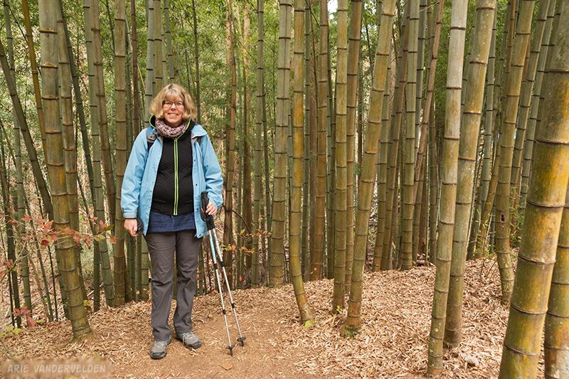Diana in a bamboo grove.