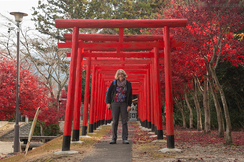 Red Torii gates and red maples.