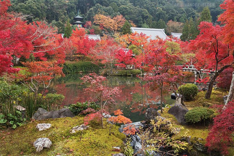 Gardens at Eikando temple.