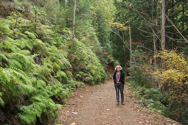 Ferns along a logging road.