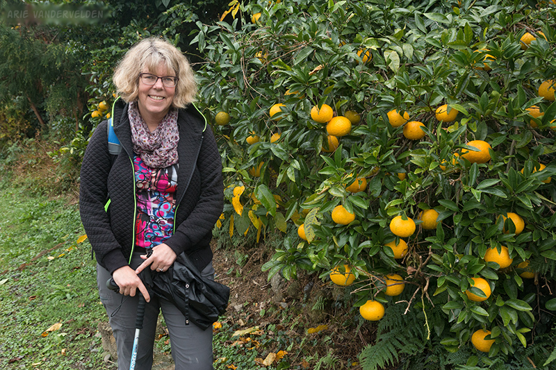 Diana beside an orange tree. There are huge orange orchards in this part of Japan.