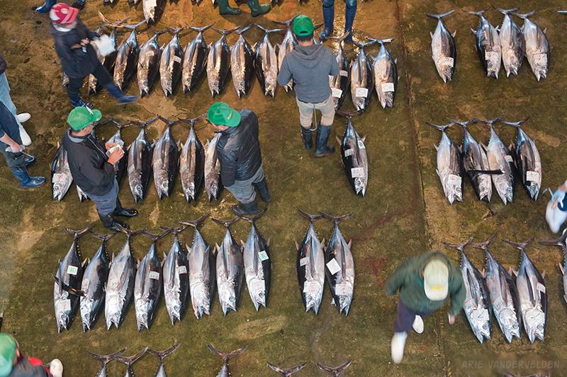 Kii-Kaatsura tuna auction.
