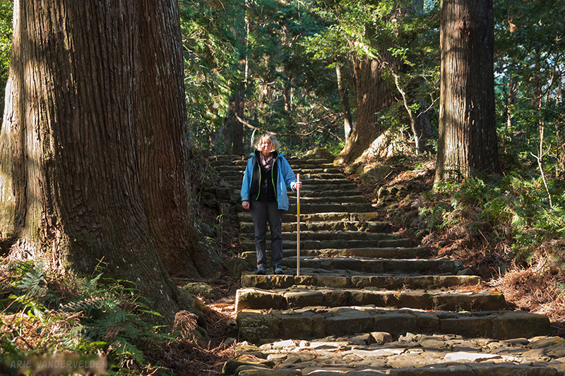 A stone staircase led past gigantic cypress trees.