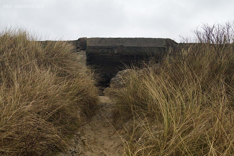 Bosplaat bunker.